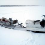 Полевые фотографии Д.Воробьева