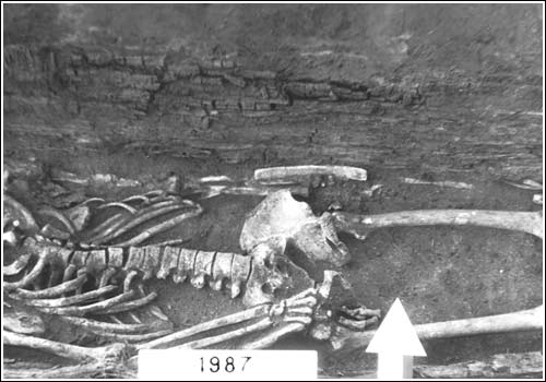 Центральная часть остатков лука в погребении кургана № 2 могильника Высокое